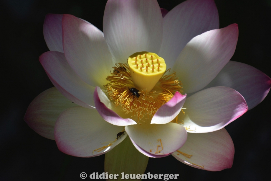 didier leuenberger -34.jpg