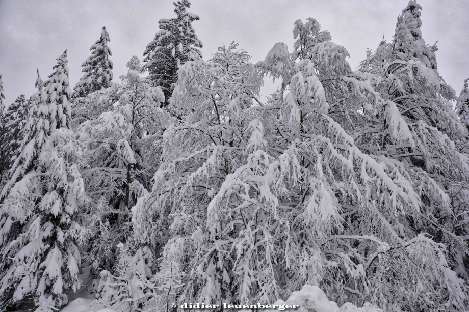SUISSE PACCOTS PHOTO N7100 12 DECEMBRE 2017 11_HDR1.jpg
