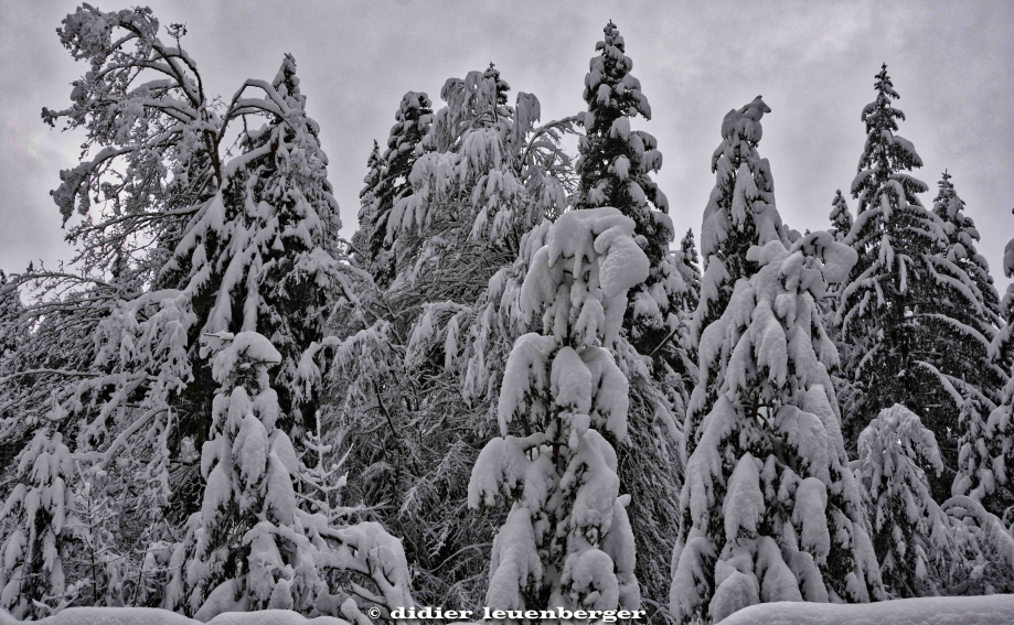 SUISSE PACCOTS PHOTO N7100 12 DECEMBRE 2017 19_HDR1.jpg