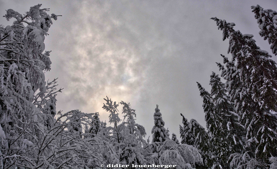 SUISSE PACCOTS PHOTO N7100 12 DECEMBRE 2017 35_HDR1.jpg