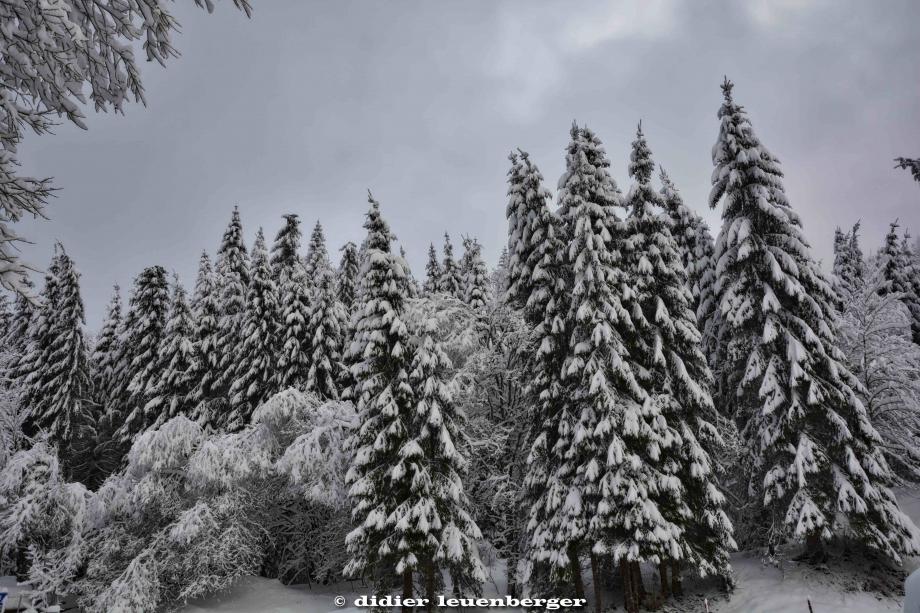 SUISSE PACCOTS PHOTO N7100 12 DECEMBRE 2017 73_HDR1.jpg