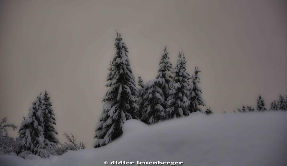 SUISSE PACCOTS PHOTO N7100 12 DECEMBRE 2017 99_HDR2.jpg