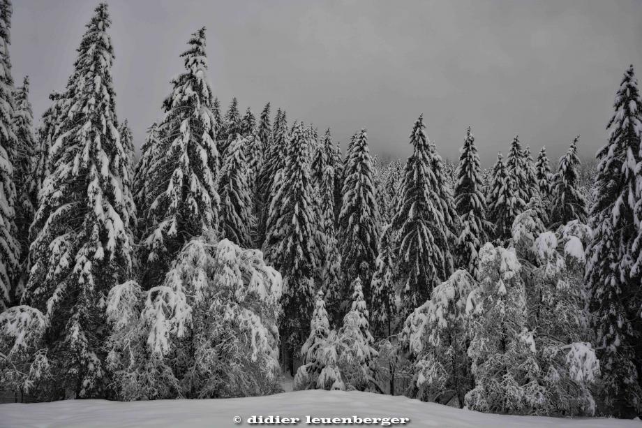 SUISSE PACCOTS PHOTO N7100 12 DECEMBRE 2017 105_HDR2.jpg