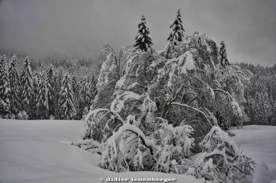 SUISSE PACCOTS PHOTO N7100 12 DECEMBRE 2017 116_HDR6.jpg