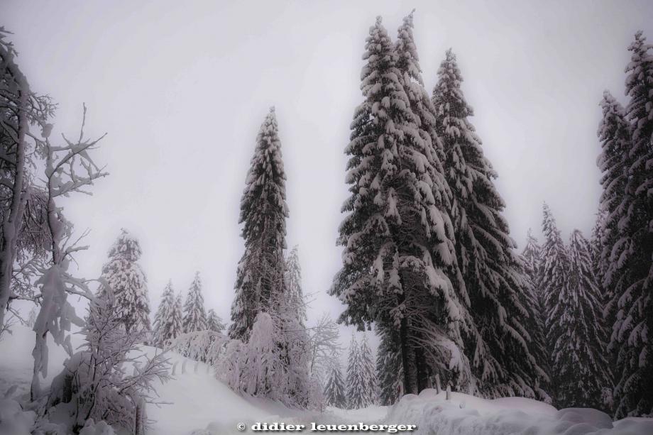 SUISSE PACCOTS PHOTO N7100 12 DECEMBRE 2017 170_HDR6.jpg