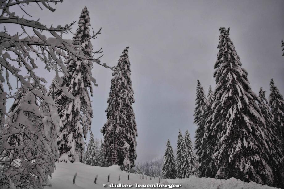 SUISSE PACCOTS PHOTO N7100 12 DECEMBRE 2017 199_HDR1.jpg