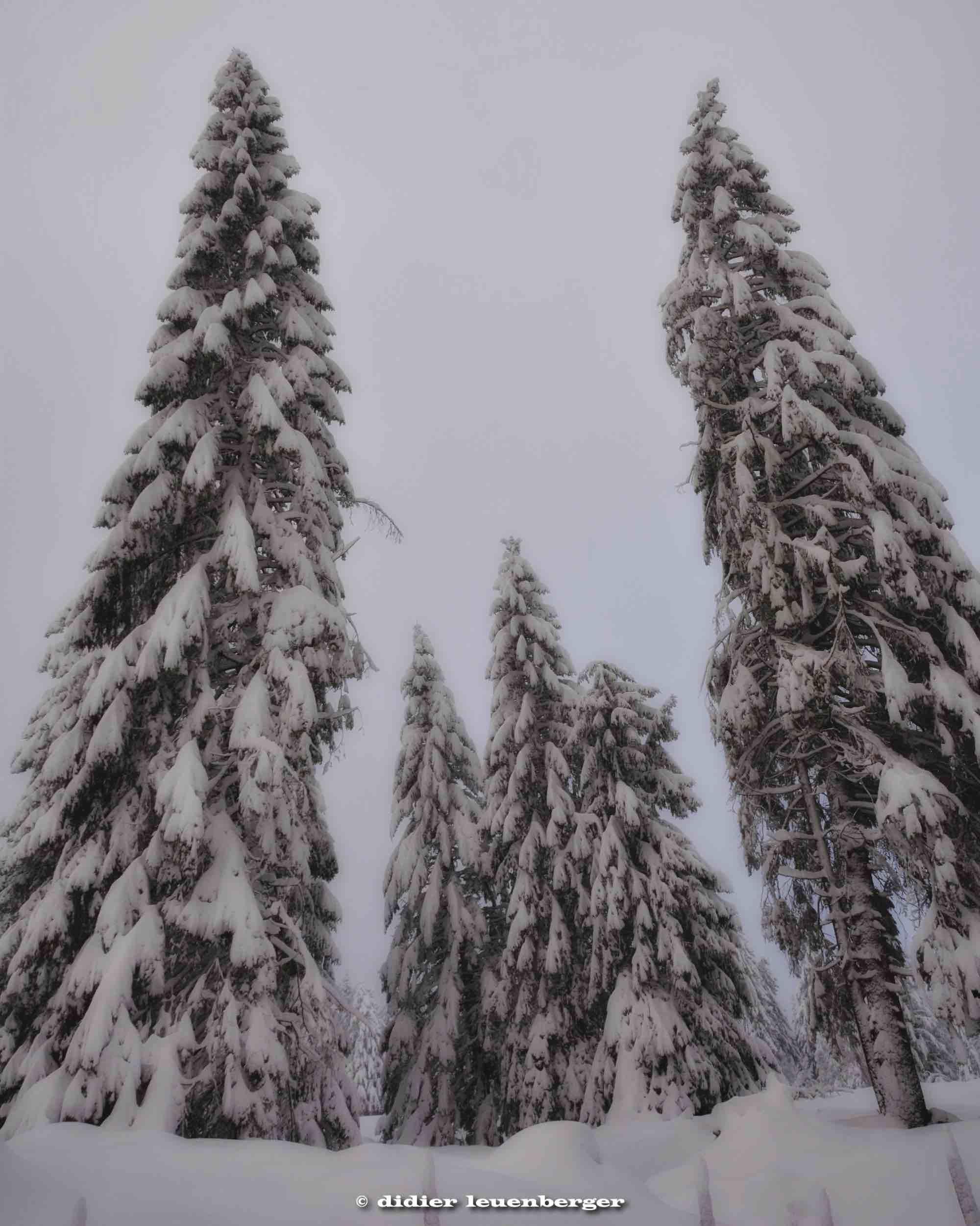 SUISSE PACCOTS PHOTO N7100 12 DECEMBRE 2017 218_HDR2.jpg