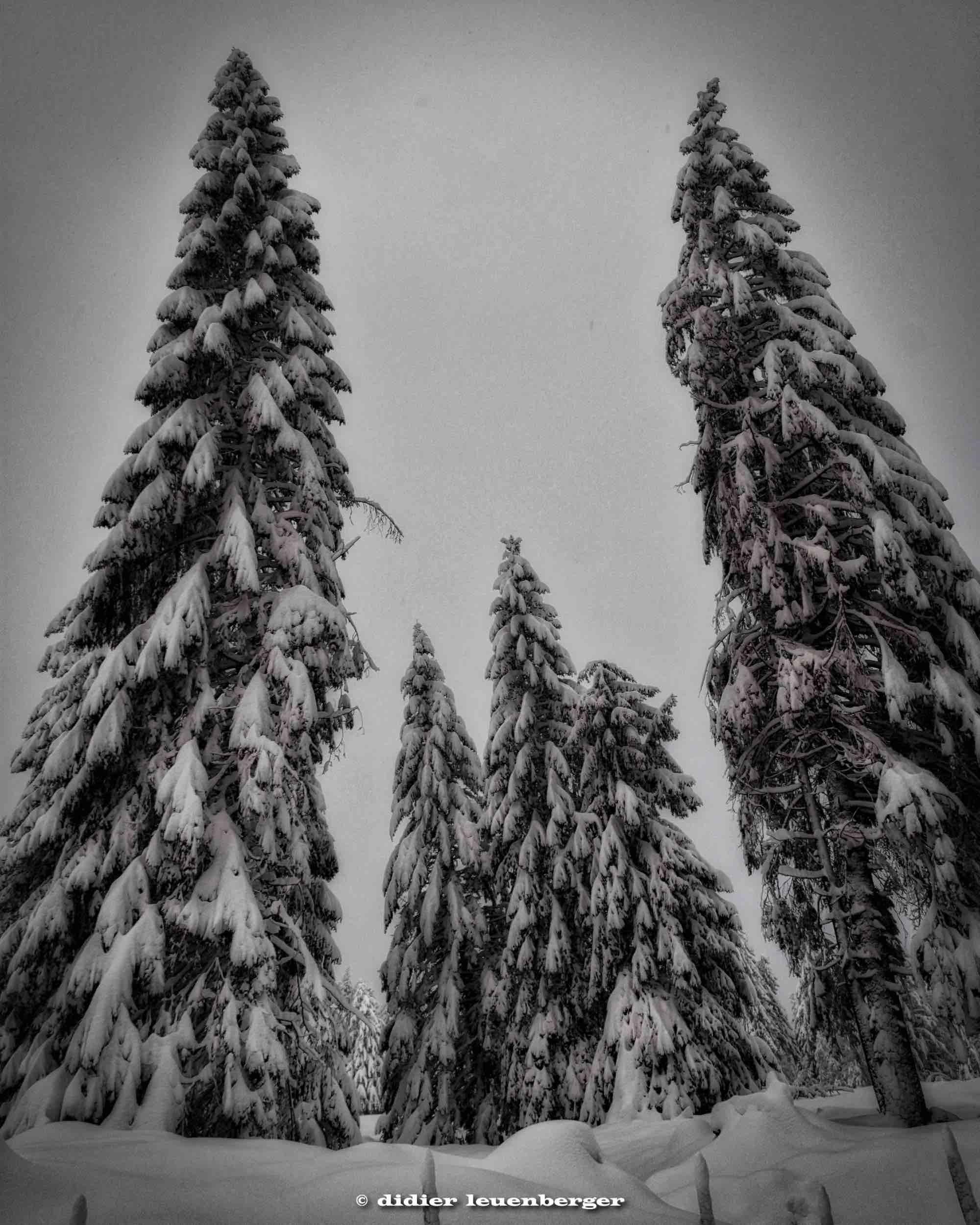 SUISSE PACCOTS PHOTO N7100 12 DECEMBRE 2017 218_HDR6.jpg