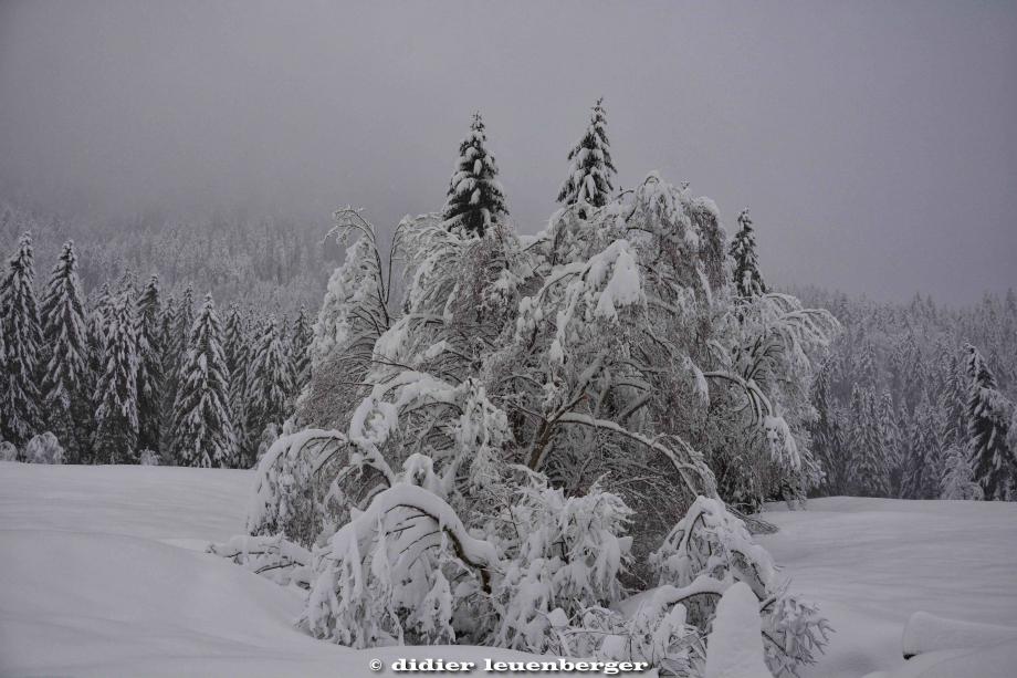 SUISSE PACCOTS PHOTO N7100 12 DECEMBRE 2017 230_HDR1.jpg