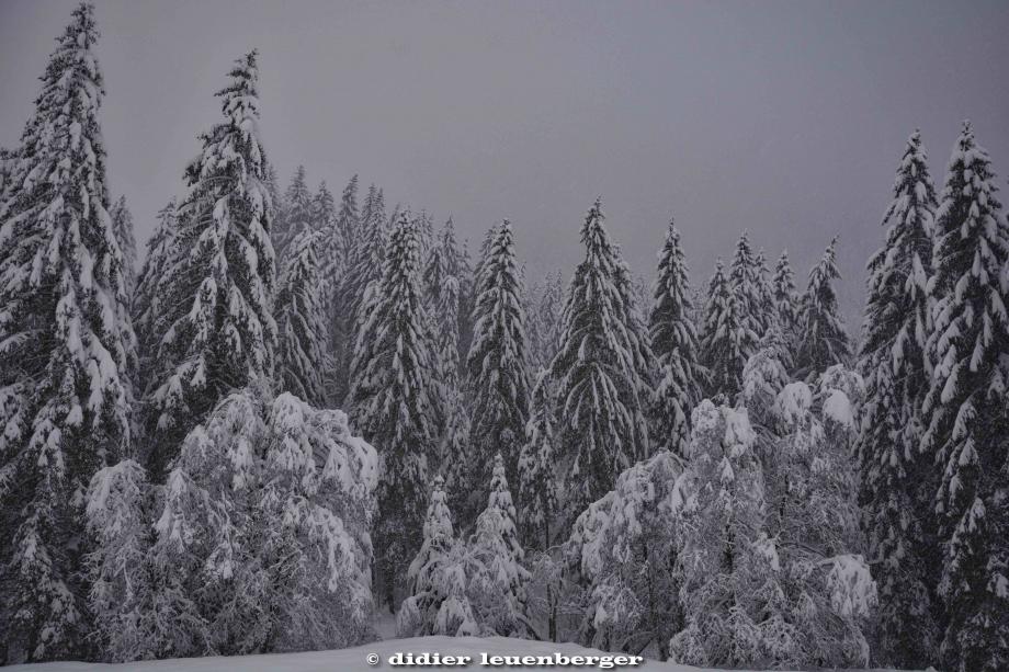 SUISSE PACCOTS PHOTO N7100 12 DECEMBRE 2017 235_HDR1.jpg