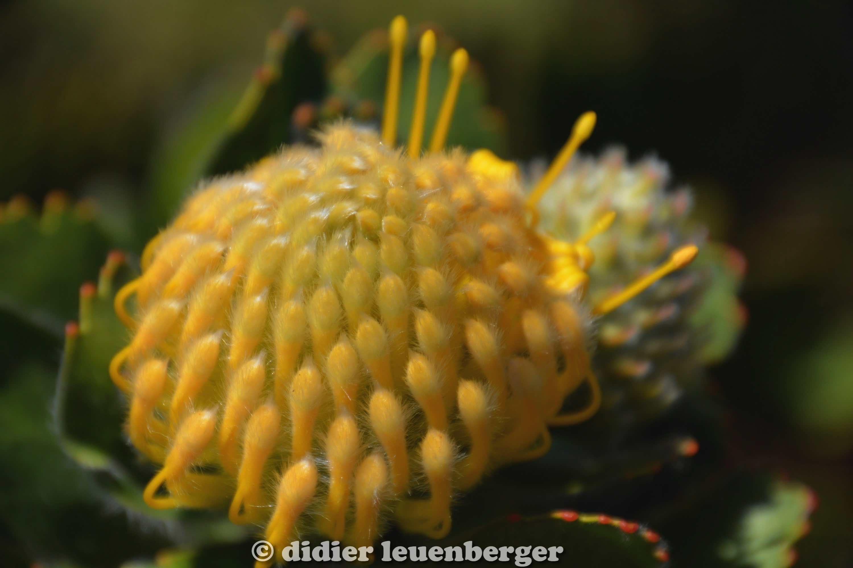 didier leuenberger -116.jpg