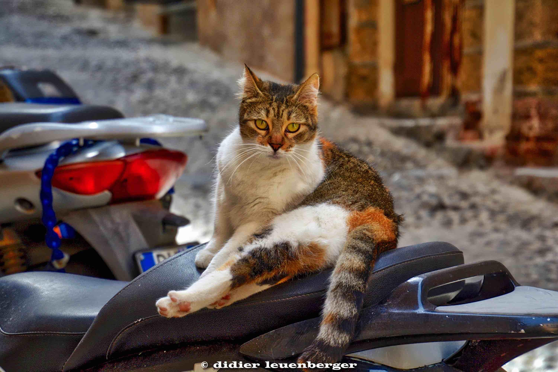 ITALIE SICILE TEMPLES PHOTO N7100 7-8 JANVIER 2018 501_HDR3.jpg