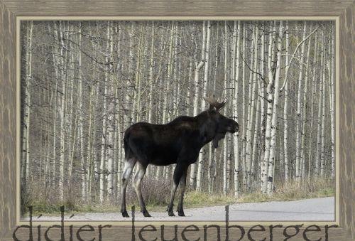 Illusion du matin à Maroon Bells, Aspen