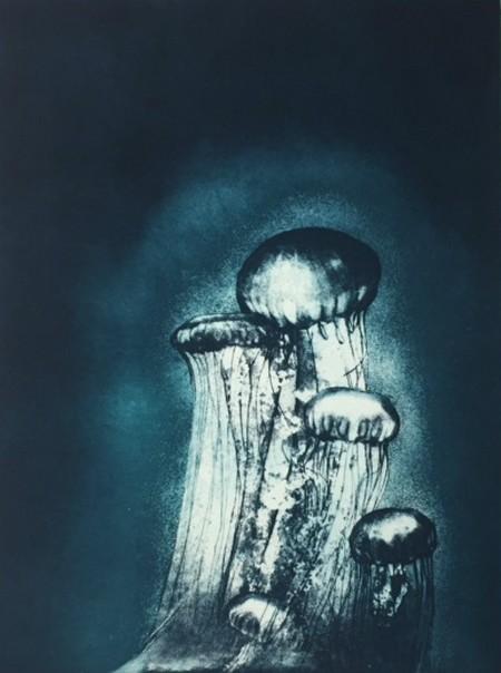 Meduses.jpg