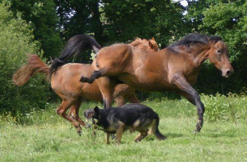 Le cheval proie?