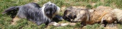 2009 06 Trop fatiguant de jouer, Nani et Zorina