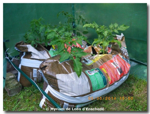 mini-Tomates-Laitues 05-05-2014 (1).JPG