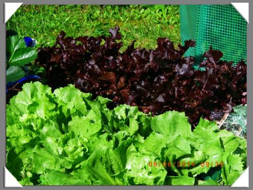 mini-Salades 09-06-2014 (3) .JPG