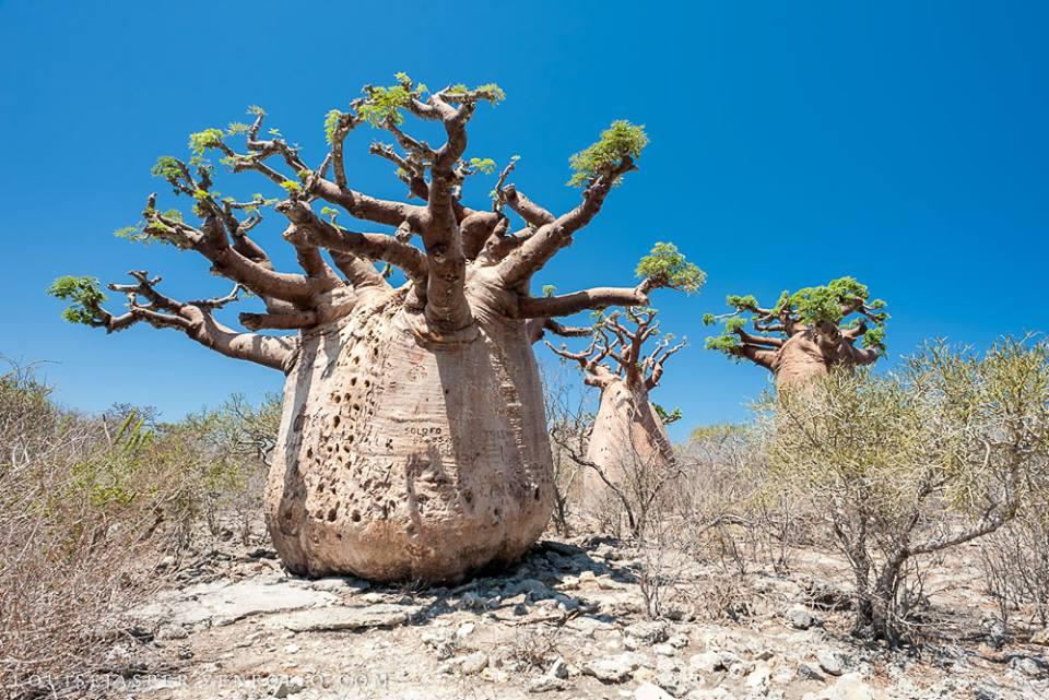 DILANN TOURS MADAGASCAR , créateur  de voyages sur mesure