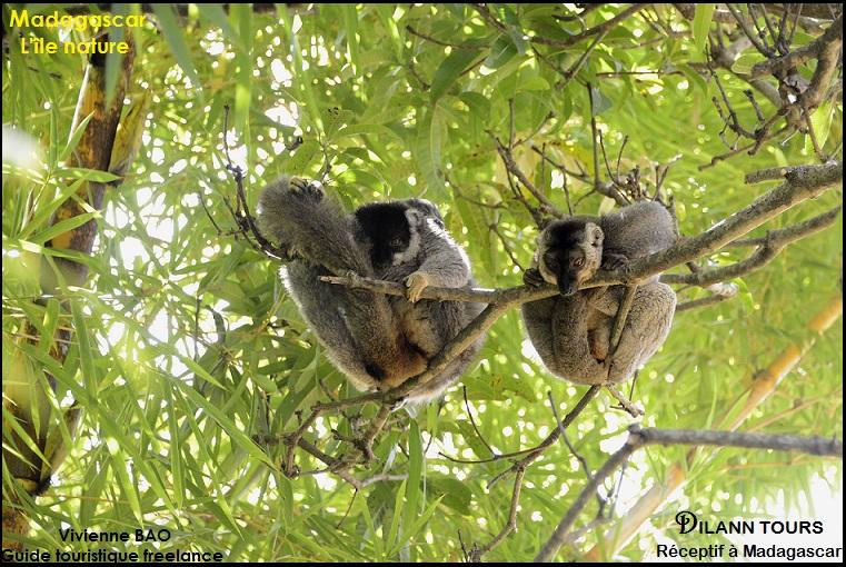 Lemurenpark_D9M0143.jpg