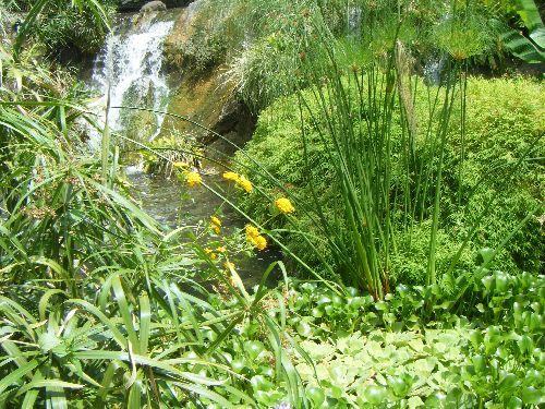Cascade mur végétal