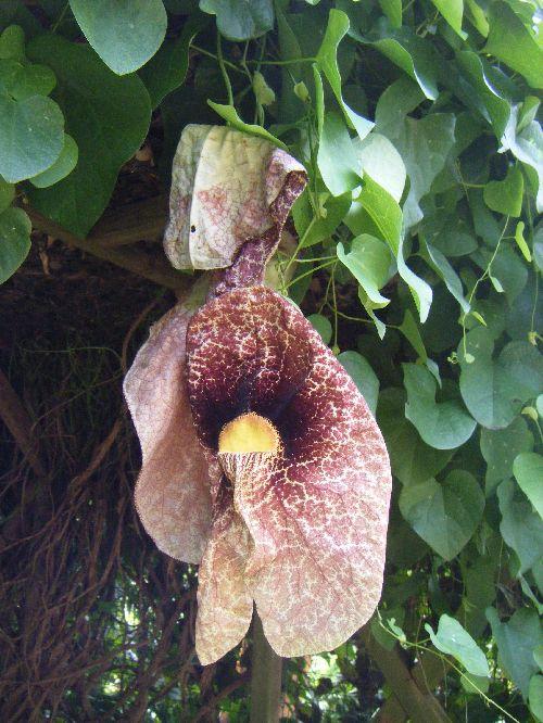Drole de fleur