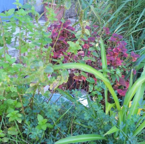 Coloris bassin 16 oct 13.jpg