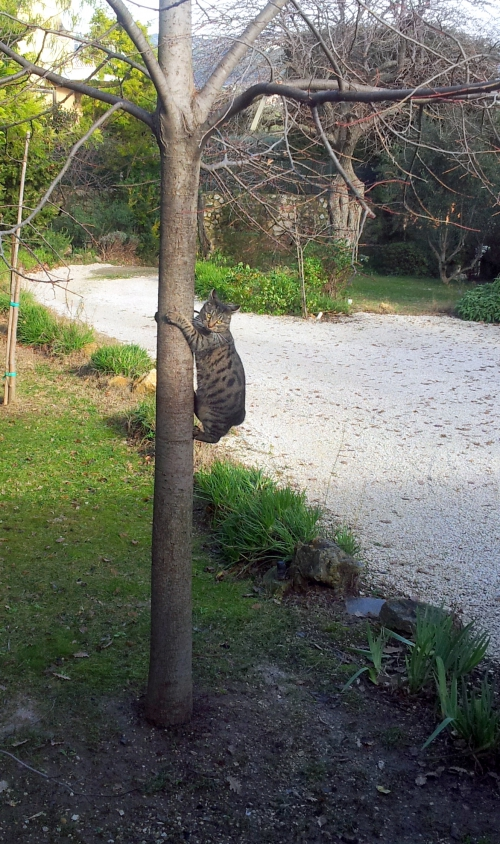 Séance de gymnastique pour le chat 3 janvier 14.jpg