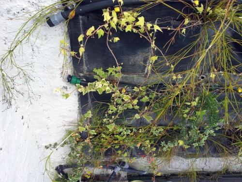 Vue mur côté gauche 25 janv 14.jpg