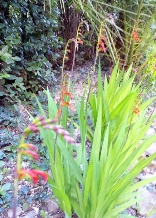 Fleurs rouge24 fév 14.jpg