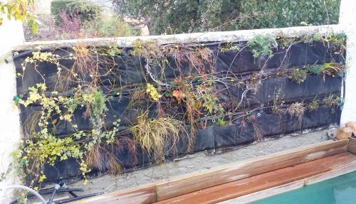Mur avec nouveaux plants à droite 20 mars 14.jpg