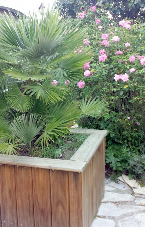 Palmier er roses 10 avr 14.jpg