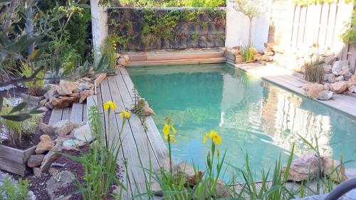 Vue piscine avec iris d'eau et mur végétal 8 mai 14.jpg