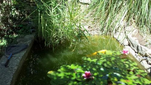 bassin bas 26 mai 14.jpg
