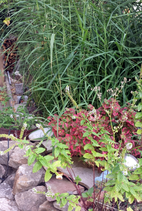 Plantes bassin haut 24 août 14.jpg