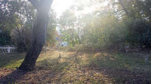 Arrosage pelouse par dispersion 18 sept 14.jpg
