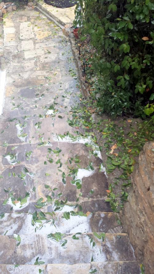 Feuillage cassé par pluie et rinçage peinture 19 seept 14.jpg