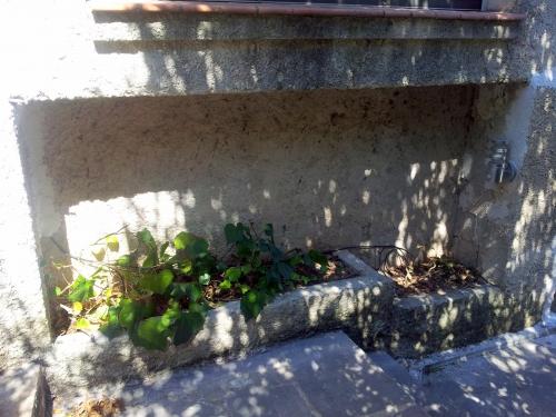 Jardnière mur maison 17 août 14.jpg