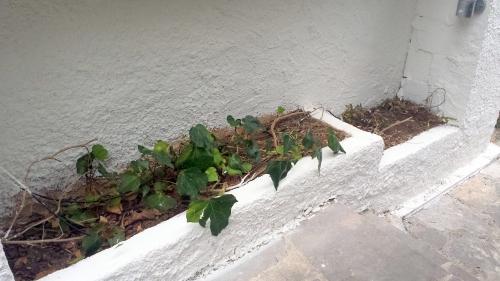 Plantations jardinières bas 29 sept 14.jpg