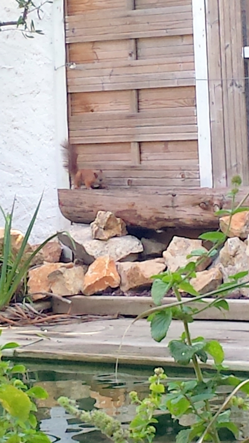 Tiens un ecureuil 21 oct 14.jpg