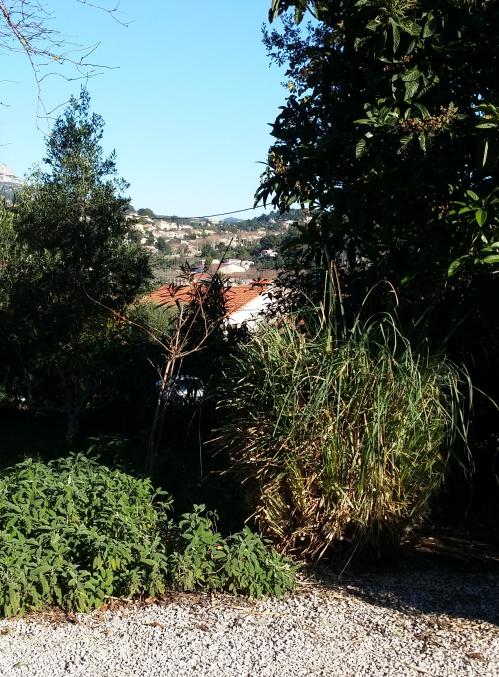 Pampa taillée 29 dec 14.jpg