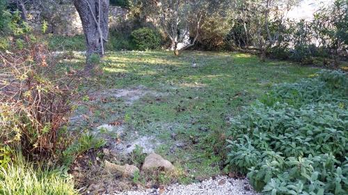 Cendre décomposition de feuilles mortes arrosage soleil et 17°c pour le gazon 7 janvier 2015.jpg