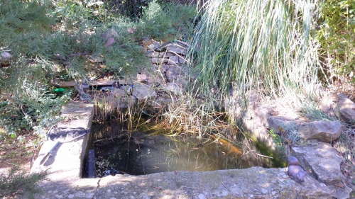 Taille phragmites bassin bas 9 janv 15.jpg