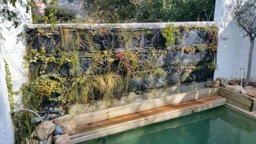 Mur végétal 1er fév 15.jpg