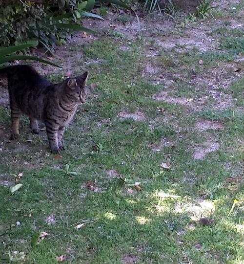 Chat jouant avec souriceau 13 avr 15.jpg