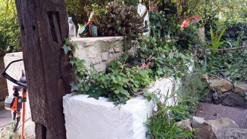 Jardnière succulente 22 avr 15.jpg