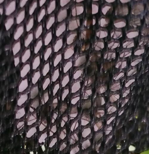 Moustiques piégés 15 mai 15.jpg