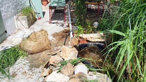Phragmittes bassin haut enlevées 23 mai 15.jpg