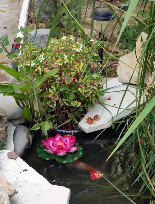 Housta bassin haut 8 juin 15.jpg