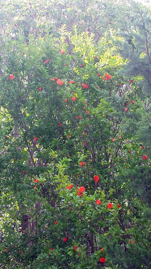 QUe de fleurs dans le grenadier 8 juin 15.jpg